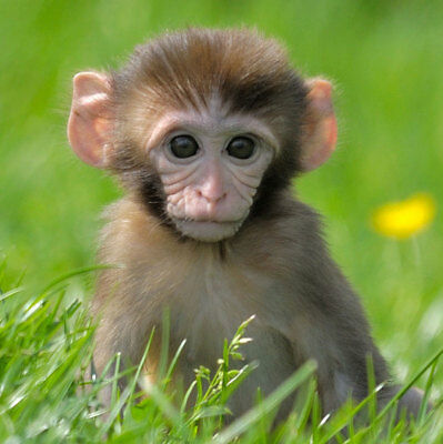 Day out tickets Family Ticket Monkey Sanctuary Looe Cornwall October half term