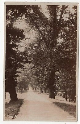 Real  Photo Postcard Of The Avenue Haverholme  Lincolnshire Posted 1908