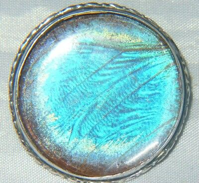 Art Deco Sterling Silver Butterfly Wing Brooch Large Round Turquoise Antique 20s
