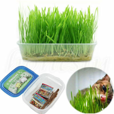 Fashion Digestive Crystal Catnip Grass Healthy Treat Cat Plant Double Seeds CU