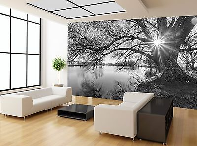 Black And White Sunset Tree Lake Wall Mural Photo Wallpaper GIANT WALL DECOR
