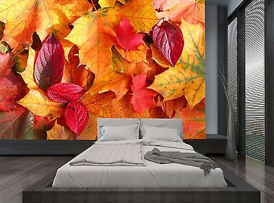 Red Yellow Leaves Autumn Nature Wall Mural Photo Wallpaper GIANT WALL DECOR