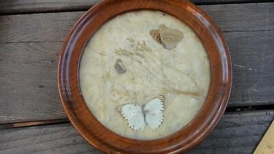 Antique Round Burl wood frame with glass 7.5""