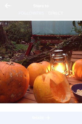 Halloween in the Forest of Dea 2 nights for 2 dogfriendly cottage Special