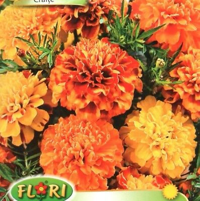 Tagetes - Marigold - Bonita Mix - 350 High Quality Flower Seeds /1259