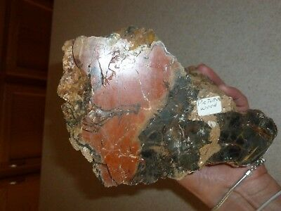 Arizona Rainbow Petrified Wood Slab Log 7.5lb