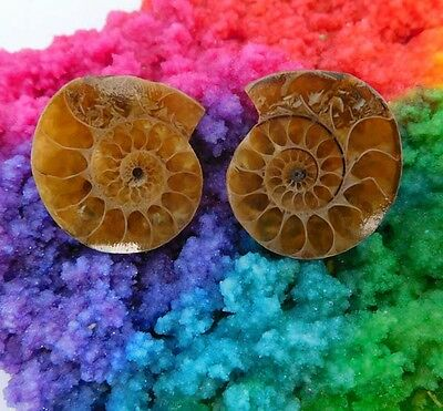 65 Cts. 100% Natural Matched Pair Of Ammonite Shell  Mineral Specimen (NH102)