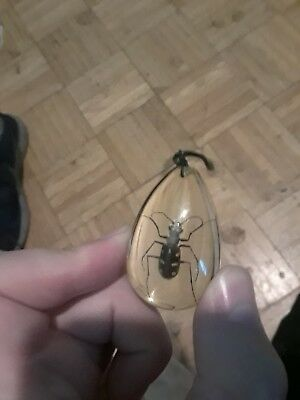 Old Insect Necklace (Real Bug!)
