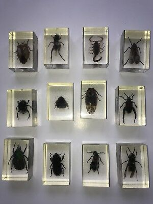 Lot of 12 Lucite Entomology Insects - Resin Bugs, Spider, Beetles vintage