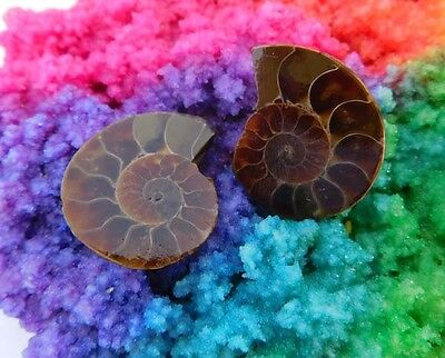 49 Cts. 100% Natural Matched Pair Of Ammonite Shell  Mineral Specimen (NH107)