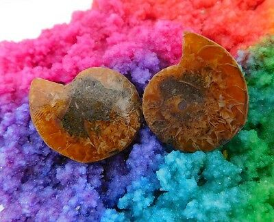 51 Cts. 100% Natural Matched Pair Of Ammonite Shell  Mineral Specimen (NH105)