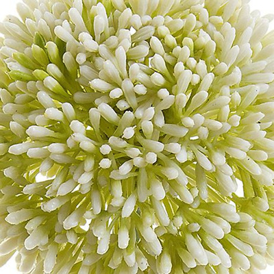 NEW White Allium Large By Freedom