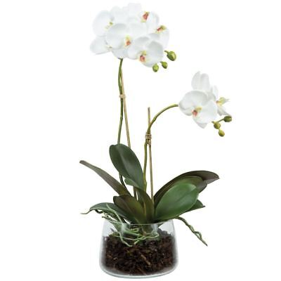 NEW White Phalaenopsis Orchid Small By Freedom