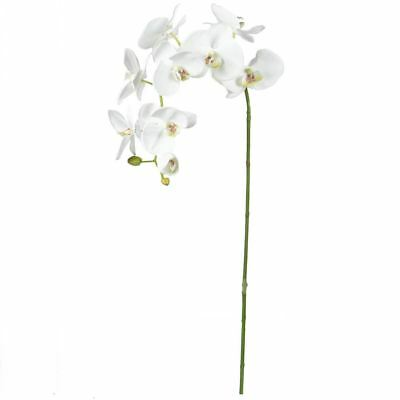NEW White Rogue Phalaenopsis Orchid Large White By Freedom
