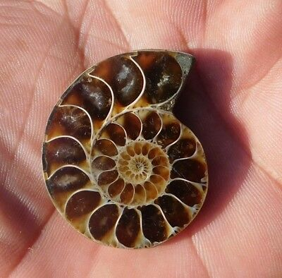 72.55 Cts Fabulous Super Ammonite  38X32X8 Mm  Cabochon Loose Gemstone