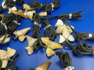 LOT 5 Otodus Shark Tooth necklace wire wrapped ship randomly