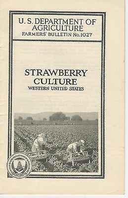 1922 Strawberry Culture Western US Farmers' Bulletin #1027 US Dept Agriculture