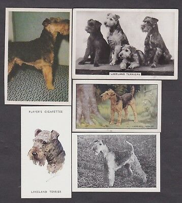 5 Different Vintage Lakeland Terrier Tobacco/Candy Dog Cards Lot