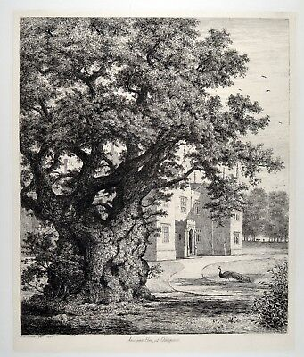 Jacob George Strutt 1825 - Ancient Elm at Checquers - Ulme old forest tree bäume