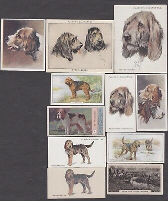 11 Different Vintage Otterhound Tobacco/Cigarette Dog Cards
