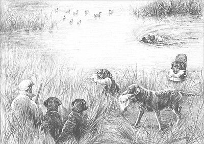 Chesapeake Bay Retriever Dogs by Marguerite Kirmse 1935 8 New Blank Note Cards