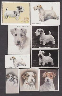 20 Different Vintage Sealyham Terrier Tobacco/Cigarette Dog Cards Lot