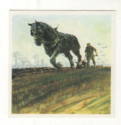 Horses in the Service of Man Trade Card - The Shire Horse