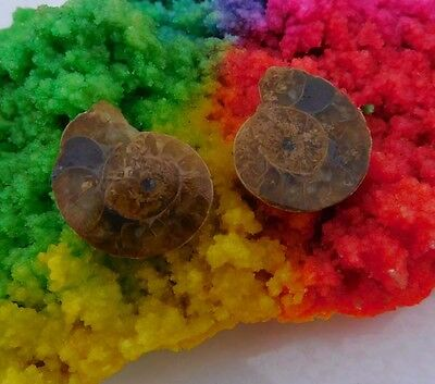 42 Cts. 100% Natural Matched Pair Of Ammonite Shell  Mineral Specimen (NH72)