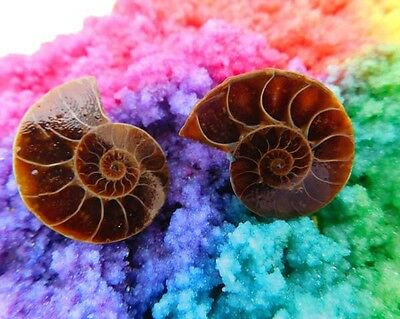 38 Cts. 100% Natural Matched Pair Of Ammonite Shell  Mineral Specimen (NH115)