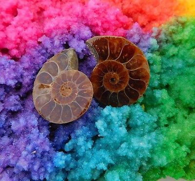 29 Cts. 100%Natural Pretty Matched Pair Ammonite Sell Minerals Specimen AJ569