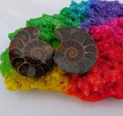 135 Cts. 100%Natural Pretty Matched Pair Ammonite Sell Minerals Specimen AJ560