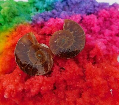 36 Cts. 100%Natural Pretty Matched Pair Ammonite Sell Minerals Specimen AJ561