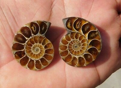 104.7 Cts Genuine? Finest Ammonite Mix  Cabochon Loose Gemstone Natural