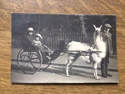 Postcard Real Photograph Seaman's Studios Dover photo antique vintage Llama kids