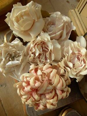 6 large vintage French 1920s millinery flowers roses in boudoir box
