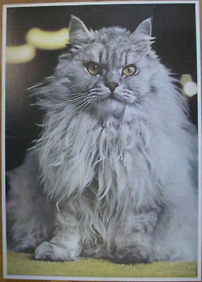 "Long-haired Cat Original Poster printed in Italy Jumbo sized 25½"" x 36"""