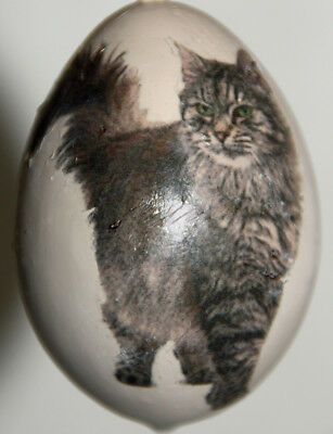 gourd Christmas ornament with Maine Coon cat