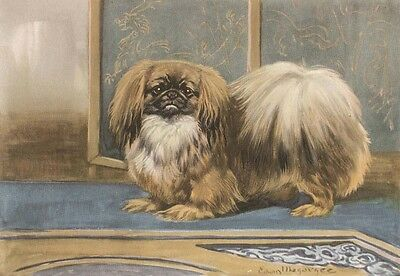 Pekingese Dog 1942 Drawing by Edwin Megargee - LARGE New Blank Note Cards