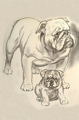 Diana Thorne Enlish Bulldog Puppies Art 1930  -  LARGE New Blank Note Cards