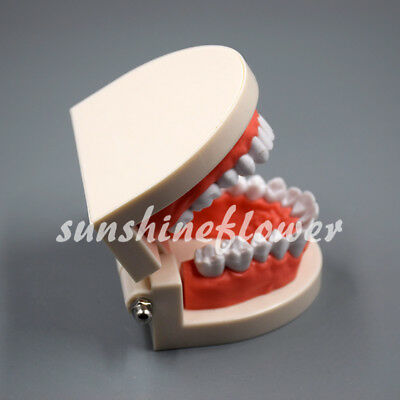 Dental Teeth Model Teach Study Adult Standard Typodont Demonstration Flesh Pink