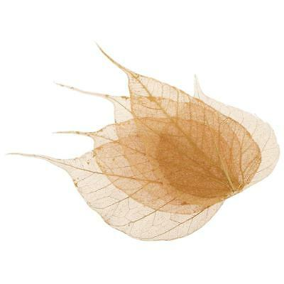 5pcs Pressed Real Dried Linden Leaves for DIY Floral Art Craft Card Making