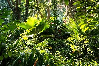 Green Rainforest Jungle Trees Forest Wall Mural Photo