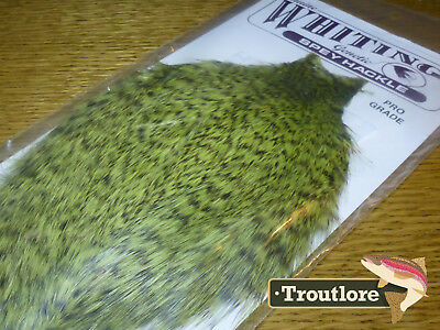 Whiting Farms Grizzly Olive Spey Hackle Rooster Cape Whole New Tying Neck