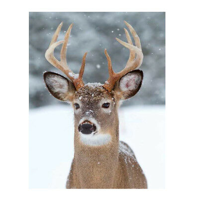 Plaid morbidotto Whitetail Deer di Daunex con stampa digitale 130x160 cm R920
