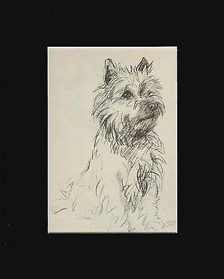 "Cairn Terrier Dog Sketch by Lucy Dawson 1940  8X10"" Matted Print"