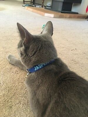 Just Pawfect Personalised Cat Collar