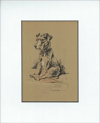 """Lakeland Terrier Dog  1937 by Print  by Lucy Dawson 8x10"""" WHITE MAT"""