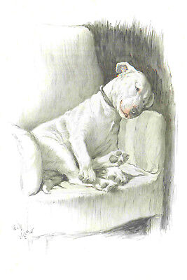 Bull Terrier Dog  by Cecil Aldin 1930  8 New Large Note Cards CRACKERS
