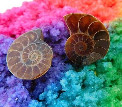 42 Cts. 100% Natural Matched Pair Of Ammonite Shell  Mineral Specimen (NH112)