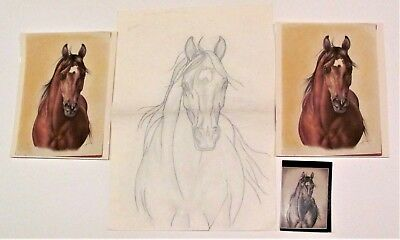 Horse #7 Pencil Sketch Drawing by Shary B Akers & Original Vintage Photos